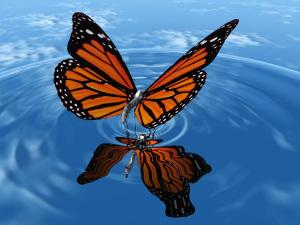 papillon sur l'eau