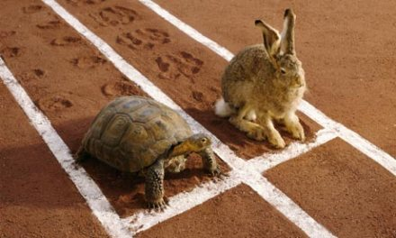 Hare and tortoise on running track